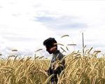 autonomie paysanne